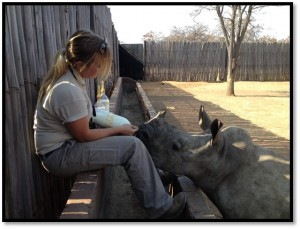 Rhino drinking milk