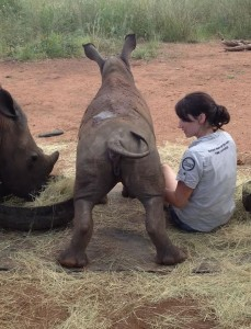 Cute Rhino Calf
